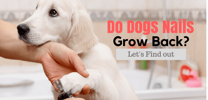 Do Dogs Nails Grow Back? Let's find out | AuthorityDog